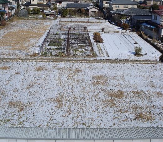 20080204 畑.JPG